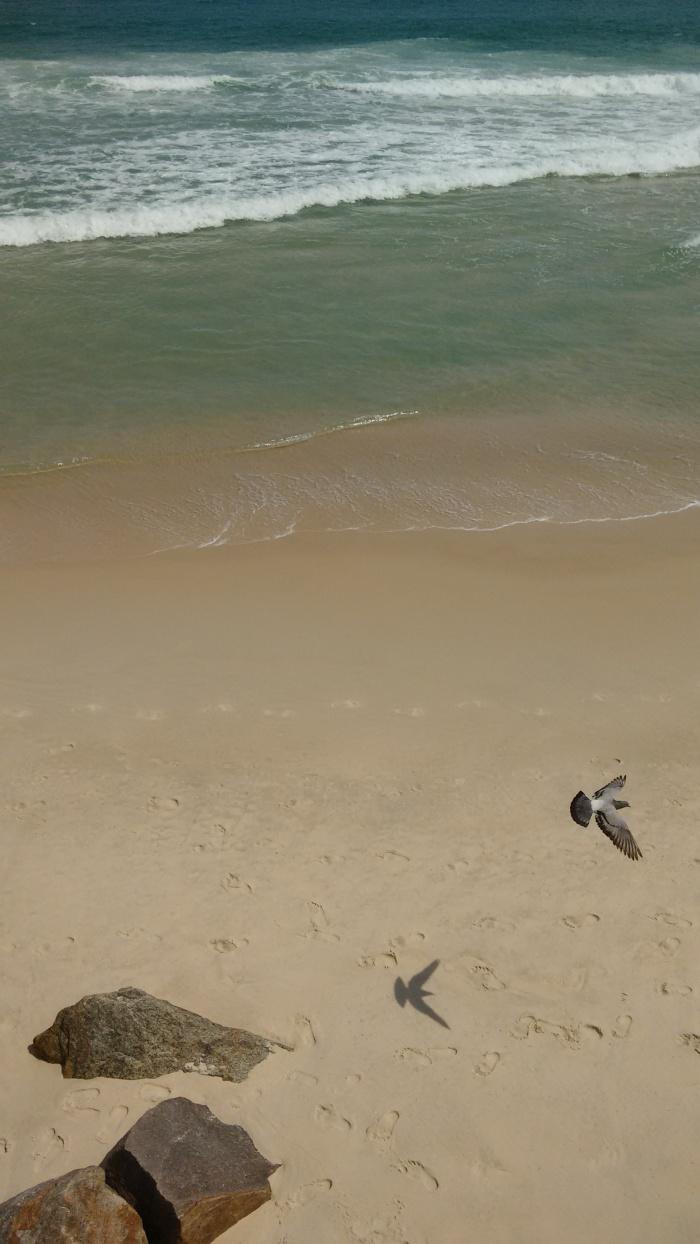 Foto3-pássaro