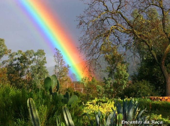 Arco-íris nas plantas
